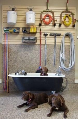Dog Wash-1